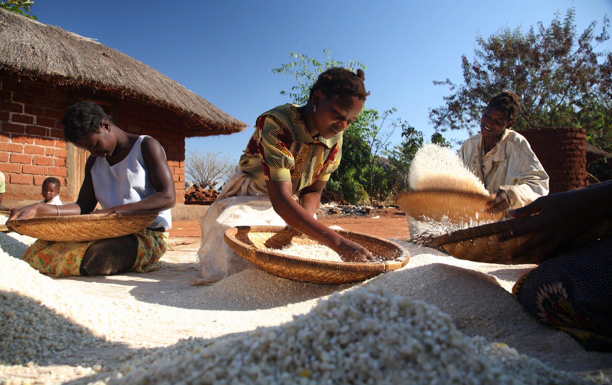 Mujeres mozambiqueñas trillando sorgo.Foto por ILRI en Flickr