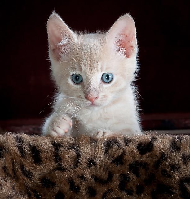 kitty-551557_640