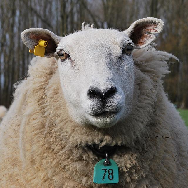 Marca personal: Ser diferentes, no simples ovejas en el rebaño