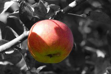 Lecciones de una manzana mordida